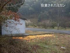 白井 写真5